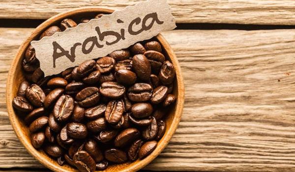 Top các loại hạt cafe phổ biến nhất tại Việt Nam - Arabica được trồng ở vùng mát mẻ
